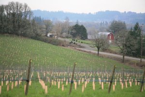 Plum Hill Winery Grape Grove.